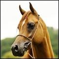 [Avatars] Horses