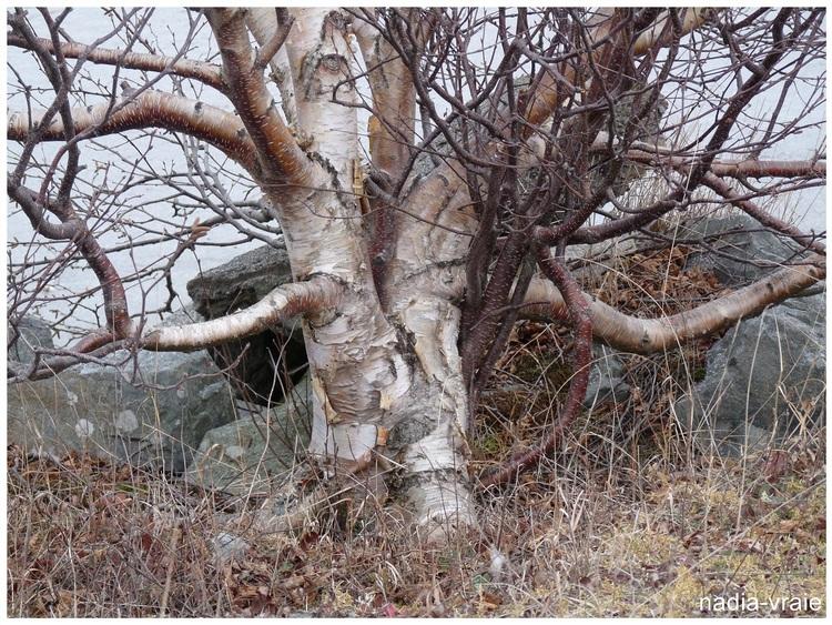 Le Bois dans tous ses états géré par Littorine/Marie-France