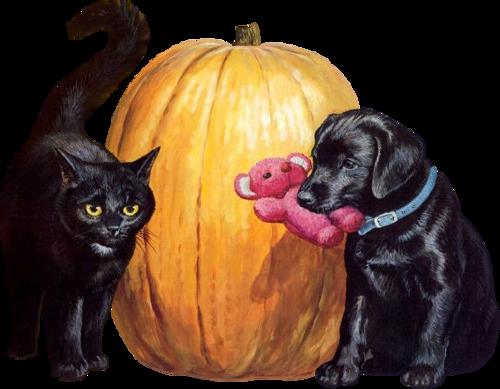 Animaux d'Halloween Série 3