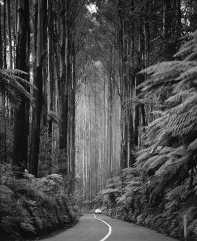 Jeudi : nature photographiée