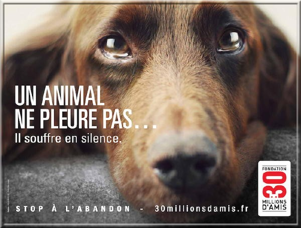 STOP A L'ABANDON !