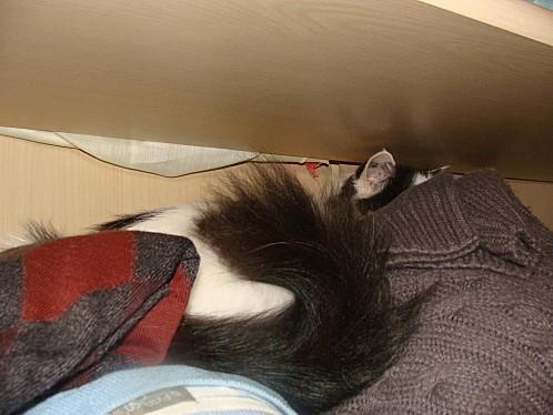 DSC04519-Feline.jpg