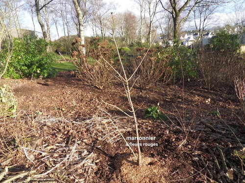 abattage d'arbres dans le jardin