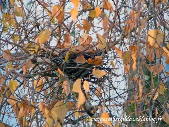 Le nid - The nest