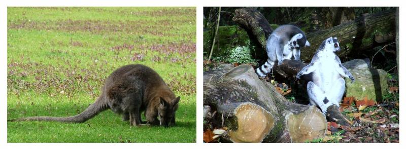 Parc zoologique de Clères