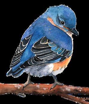 Petits oiseaux !