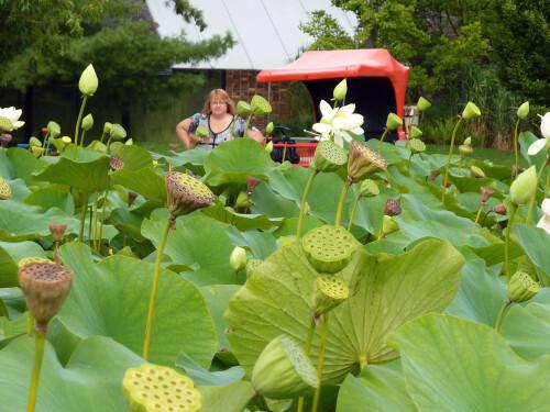 Isabelle dans les lotus