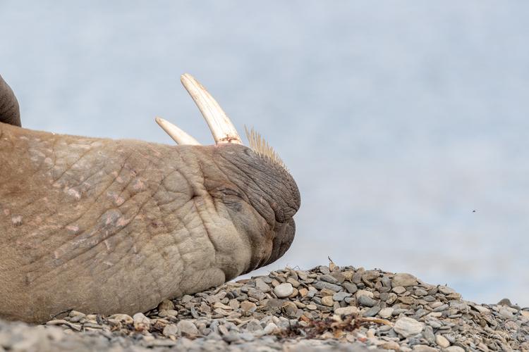 Dimanche, chasse au canard