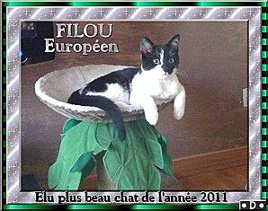 FILOU---beau-chat-de-l-annee-20111-copie-1.jpg