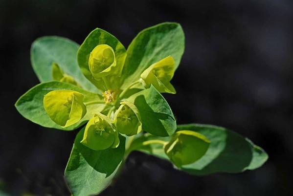 Fleurs-10-0127.jpg
