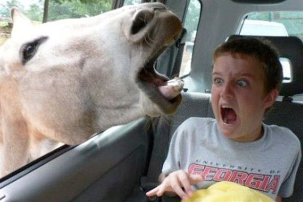 horse-photobomb