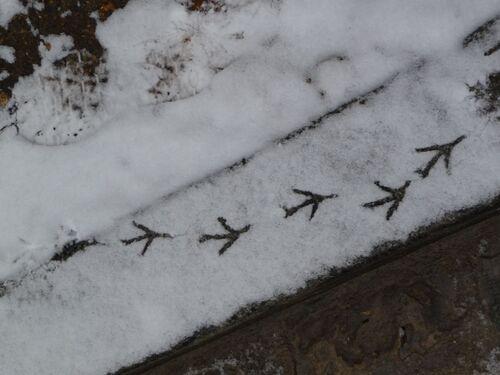 Fichier pour les petits: Les oiseaux en hiver