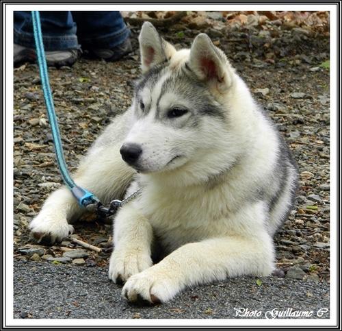 Ianko (4,5 mois)