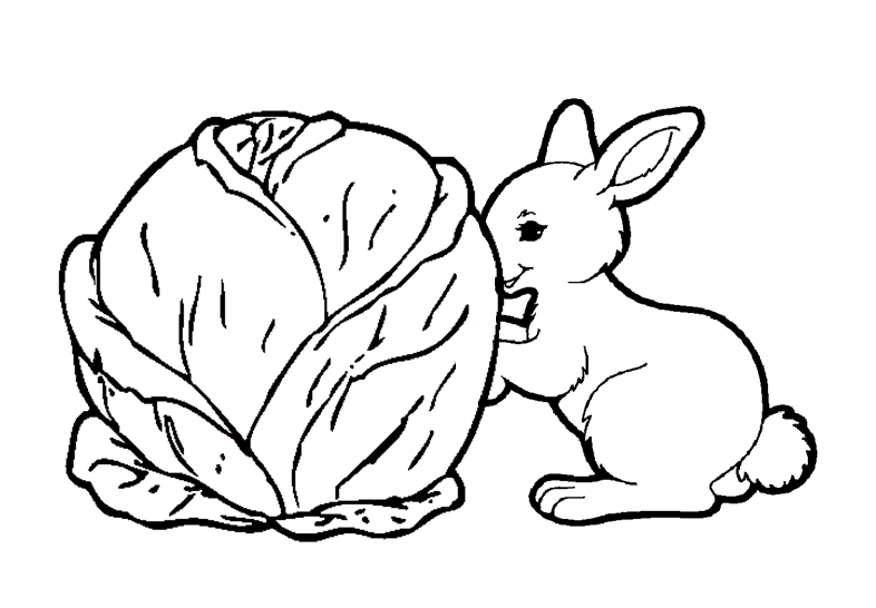 Mon petit lapin ms c maternelle - Mon petit lapin s est cache dans le jardin paroles ...