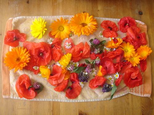 7 juin - Mon panier du jour : coquelicot, camomille, calendula