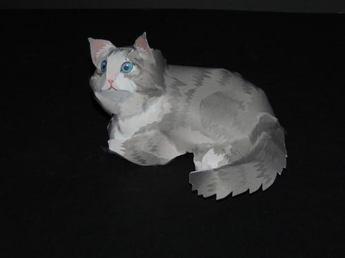 Le chat nouvel version