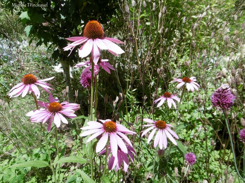 Une balade dans les Jardins de Cloggs à GAUSSAN (65), le 14 juillet (suite n° 2 et fin)...
