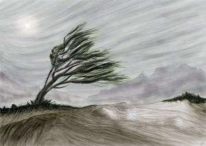Il a fait très beau ... mais ce vent ...