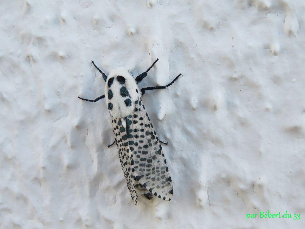 un insecte inconnu  !