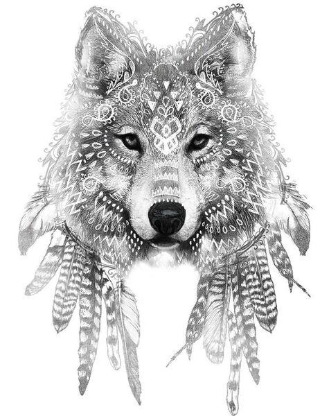 Dessin d'un loup