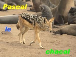 chacal.jpg