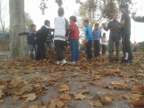 7 novembre 2011 Les feuilles se décident à tomber