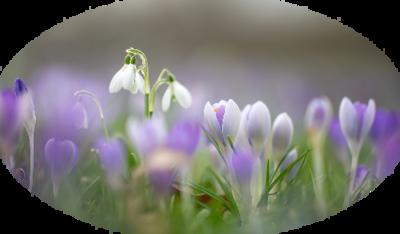 Tavaszi réten..