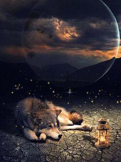 Il était une fois ...un loup....un feu....des cailloux..la lune