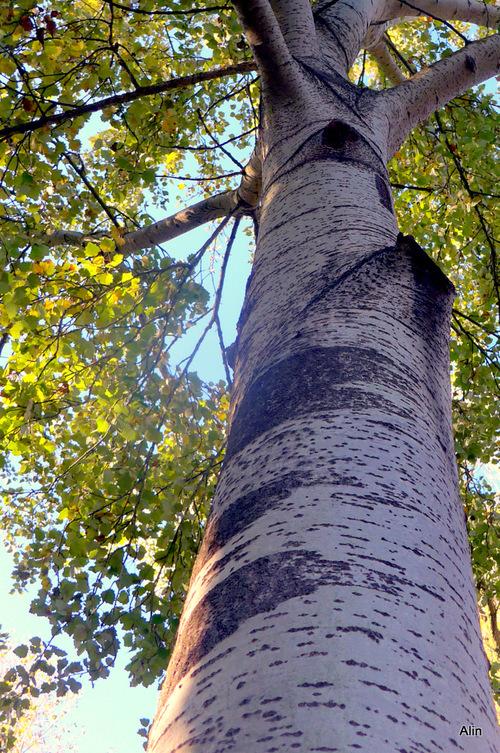 Un arbre en automne ...