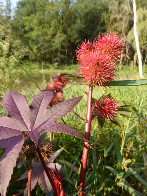 - Une plante énigme pour ce deux de septembre -