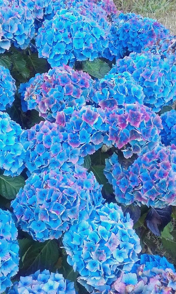 des bleus à l 'été
