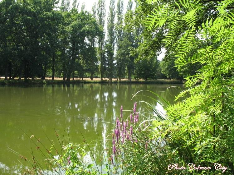 Parc de Schoppenwihr (68) :   Le grand étang