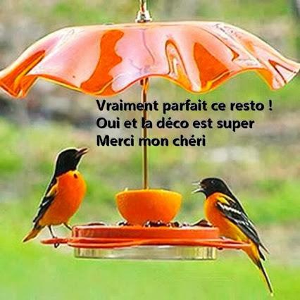 http://ekladata.com/rDTF94QRuQ-92e_T1tt-NUzsDWw/restaurant-oiseaux-parasol-orange-pamplemousse.jpg