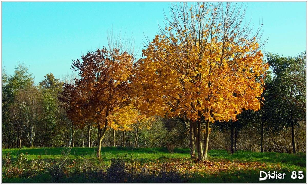 (85) Vendée - La Chaize le Vicomte (5) - Vallée Verte aux couleurs d'automne