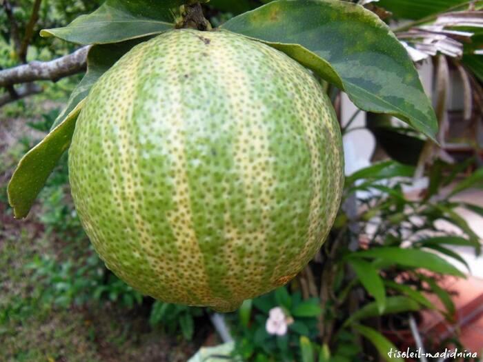 citrons panachés