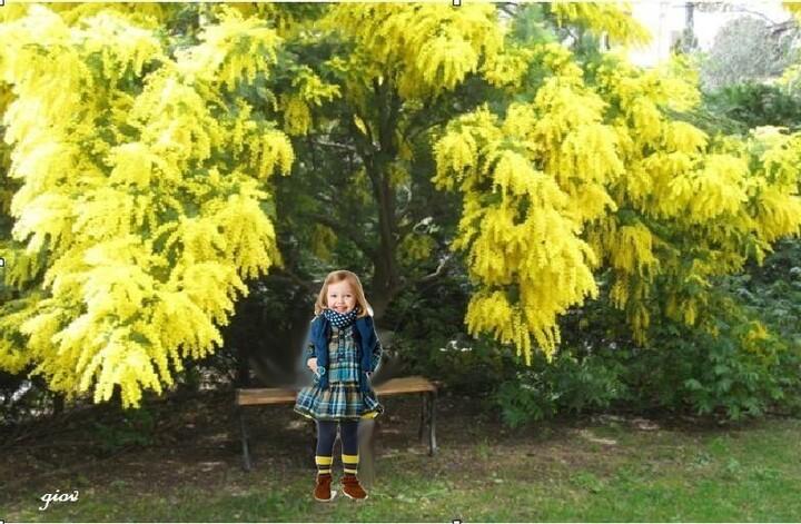 C'est vraiment la période une petite balade au milieu de ces fleurs couleur d'or