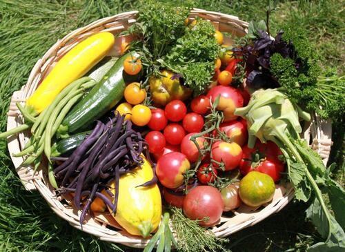 Panier de légumes BioTiLande