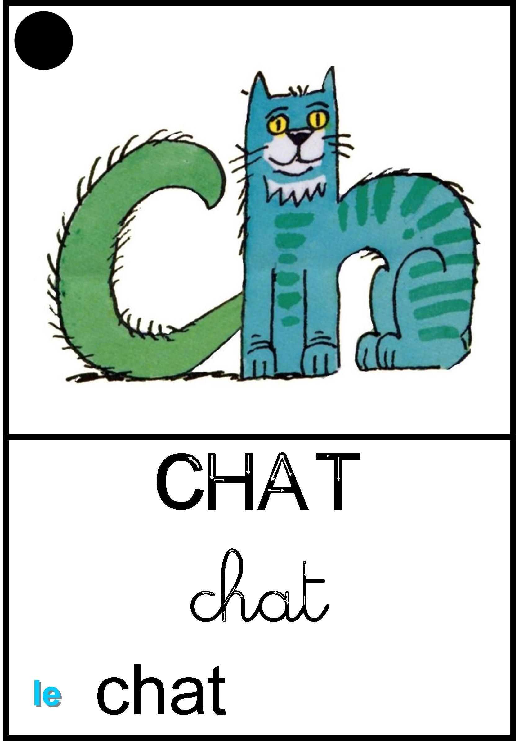 Affichage Le chat