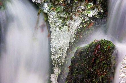 « La Nature peut tout et fait tout »