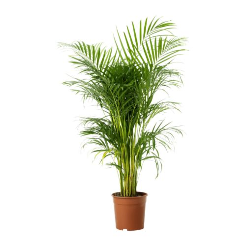 Arroser les plantes en vacances