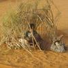 mauritanie piste kiffa kayes premier bivouac 3