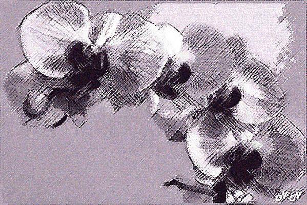 orchidee-passee.jpg