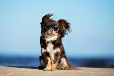Choisir un chien en fonction de son signe astrologique ...