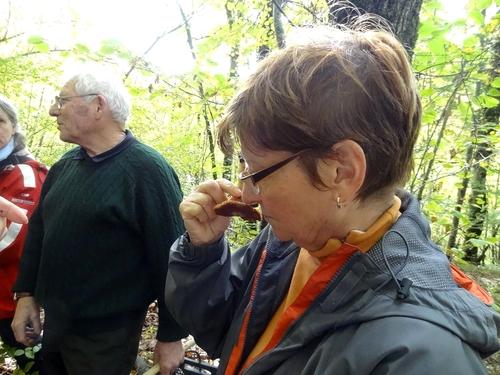 Une sortie de récolte et de détermination de champignons, avec la Société Mycologique