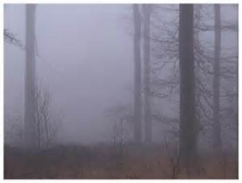 forêt brouillard