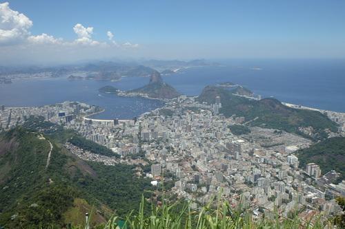 Pau Brasil.