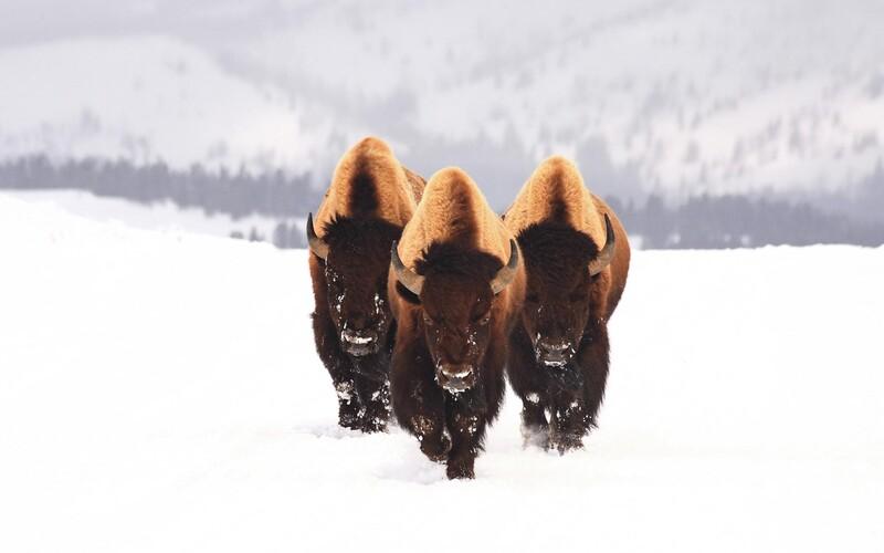 20 photos d'animaux - 3