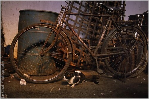 Vélo, vélo......................
