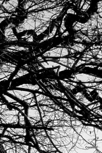 z14---Branches.jpg
