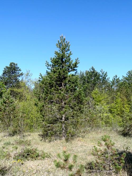 espèces de nos forêts